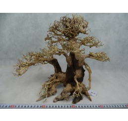 Bonsai de paisajismo (XL)