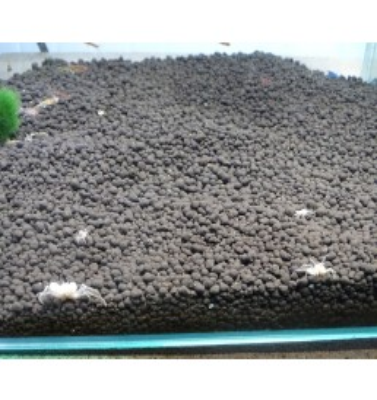 Limnopilos naiyanetri – Cangrejo enano